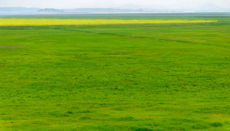 This is a big grass in the south of CHINA.