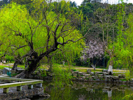 nature landscape in the south of China.