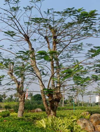 This is a tree