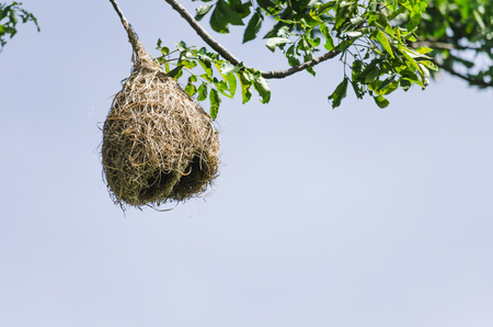 つばめの巣の建物