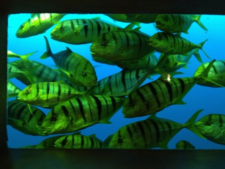 a school of tropical reef fish.