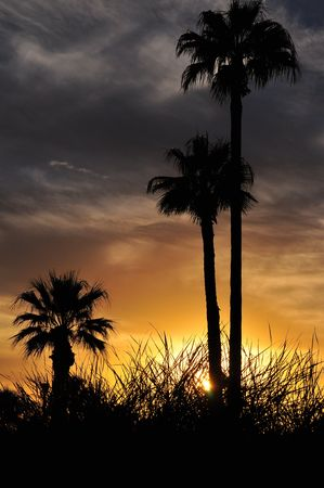 Palms at sunset with a storm approaching