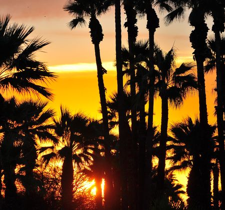 Palm grove at sunset Imagens