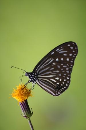 beautyful: beautyful in garden