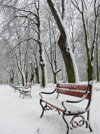 Red benches in a park in winter photo