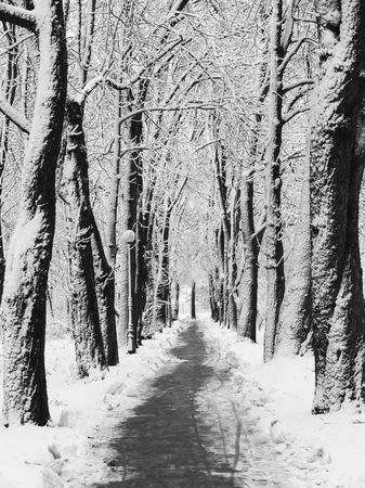 snowlandscape: Winter lane Stock Photo