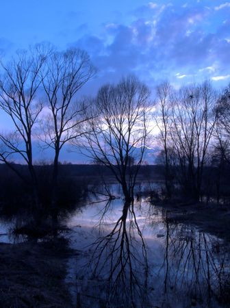 Trees reflecting in a river photo