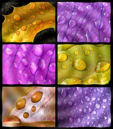 Spring rain collage photo