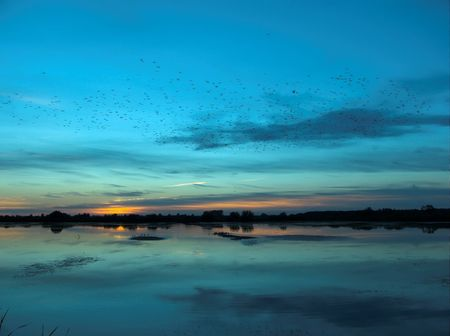 A flock of birds flying over a lake at sunset photo