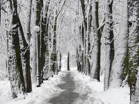 snowlandscape: Park alley covered with snow