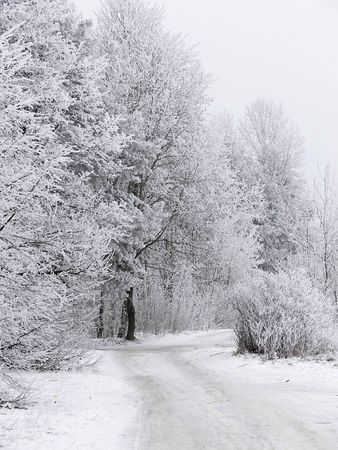 snowlandscape: Frosty winter forest Stock Photo