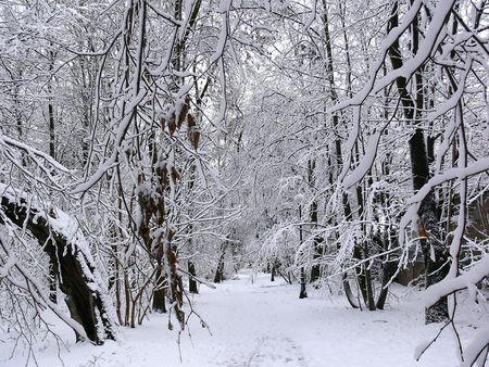 snowlandscape: Snowy winter landscape