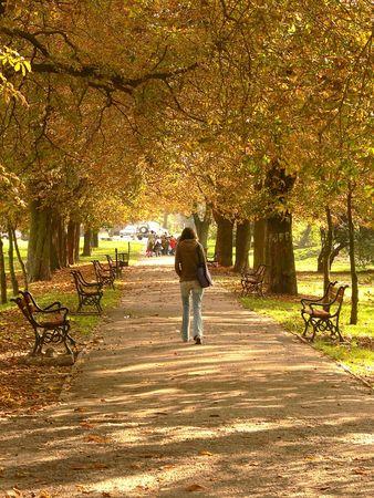 Park alley in autumn photo