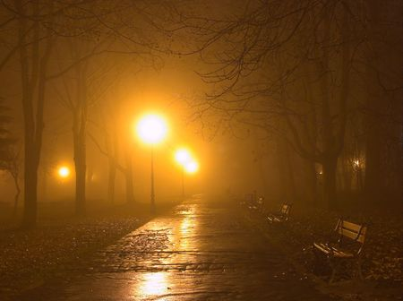 Park alley in the fog at night photo