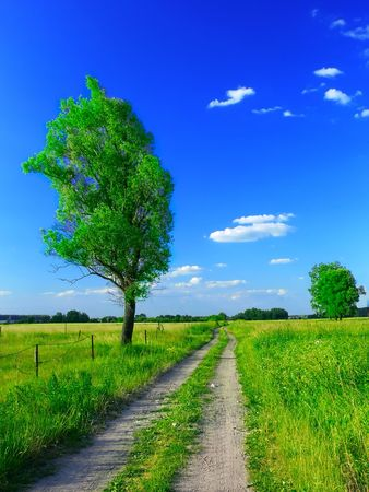 Country road in summer Stock Photo - 794317