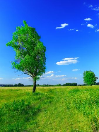 Beautiful summer landscape photo