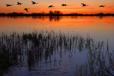 Dusk by the lake with a flock of ducks Stock Photo