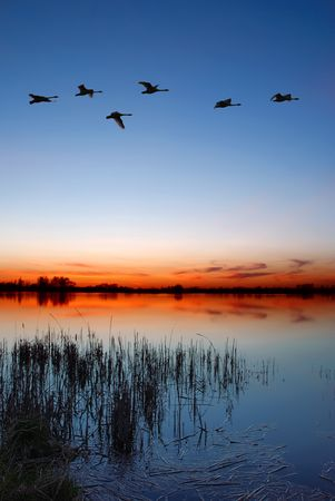 birds lake: Dusk by the lake with a flock of ducks Stock Photo