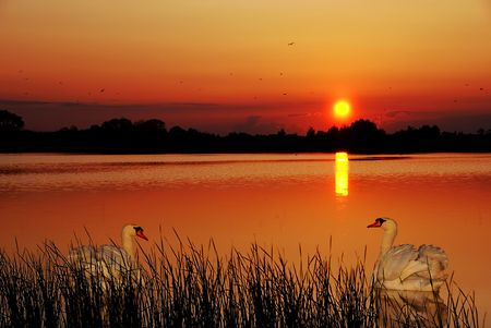 copule: Red sunset with a copule of swans in the foreground Stock Photo
