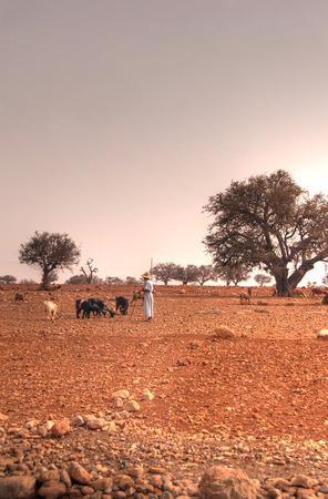 herdsman: Shepherd with goats in Africa