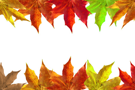 Autumn leaves background photo