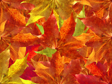 Autumn leaves background Stock Photo - 1683858