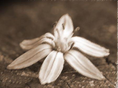moonlit: Grunge floral background