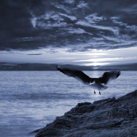 Seagull taking off photo