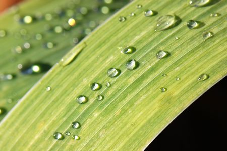 Raindrops on a leaf Stock Photo - 2025533