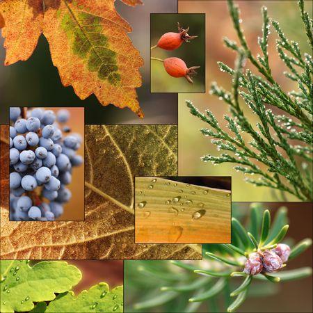 Autumn collage photo