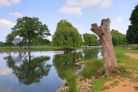 bushy: Bushy park in London