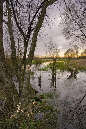 pantanos: Primavera pantanos  Foto de archivo