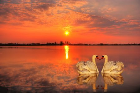 Red sunset with a couple of swans in the foreground Stock Photo - 2940071