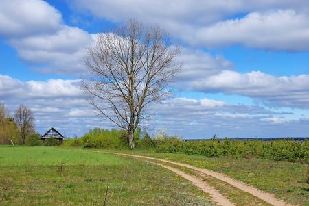 Country road in green field photo