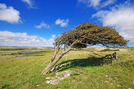 Single tree in the mountains Stock Photo - 3314431