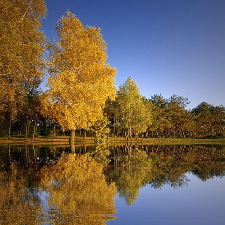 cloudless: Colorful trees reflecting in a lake