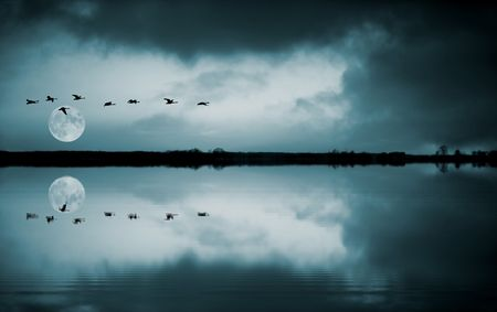 Full moon and flying birds reflecting in water