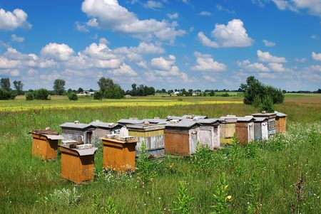 agribusiness: Bee hives in the meadow in summer