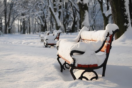 Winter park with red benches covered with snow photo