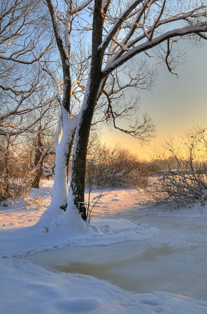 Beautiful winter sunset with a tree in the snow photo