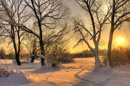 january sunrise: Puesta de sol de invierno hermoso con �rboles en la nieve