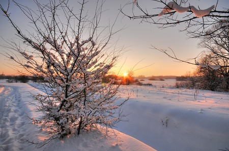 Beautiful winter sunset with a tree in the snow Stock Photo - 7845027
