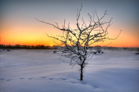 Beautiful winter sunset with a tree in the snow Stock Photo - 7844993