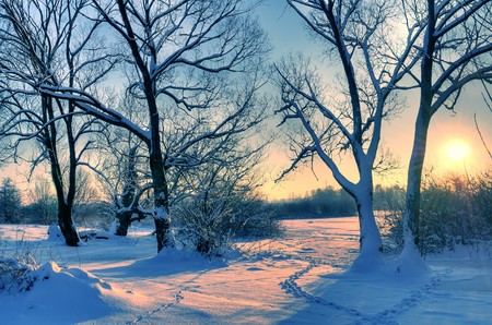 Beautiful winter sunset with trees in the snow photo