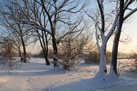 Inverno bellissimo tramonto con alberi nella neve Archivio Fotografico - 8341447