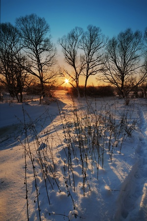 Beautiful winter sunset with silhouette of trees in the snow Stock Photo - 8341446