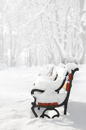 A row of red benches covered with snow in the fog in winter photo