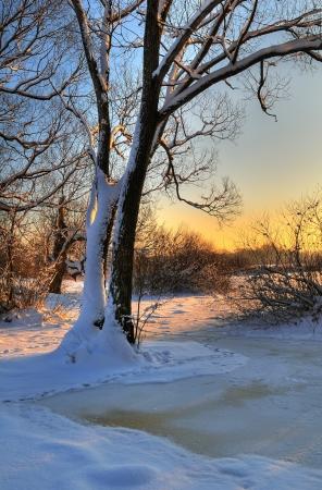 bosque con nieve: Puesta de sol de invierno hermoso con un �rbol sobre un r�o congelado Foto de archivo