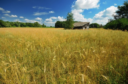 Old wooden shed in the field in summer Stock Photo - 8897097
