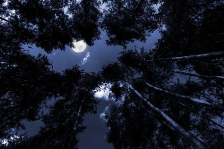 Moon shining over the tree tops at night photo